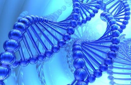 Cau truc sap xep ADN trong te bao con nguoi